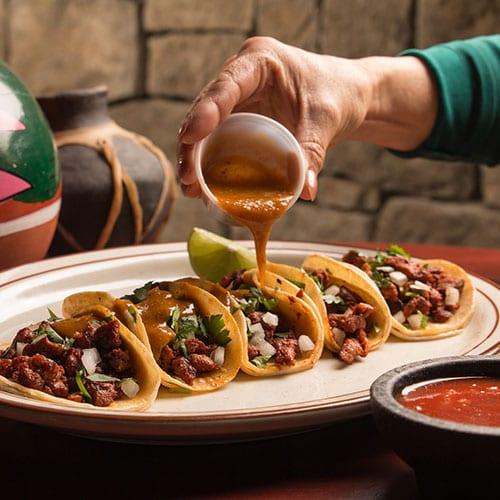 chihuahua taco tuesday